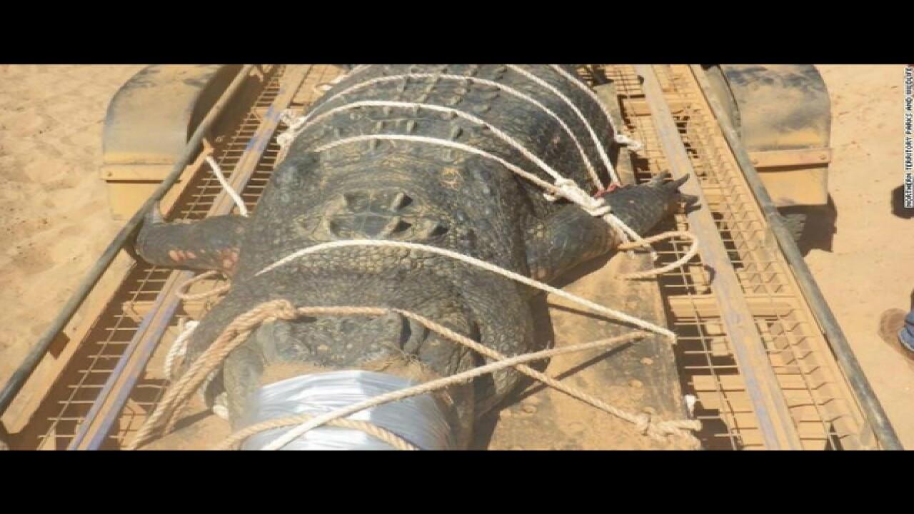 Australian rangers capture 1,300-pound crocodile