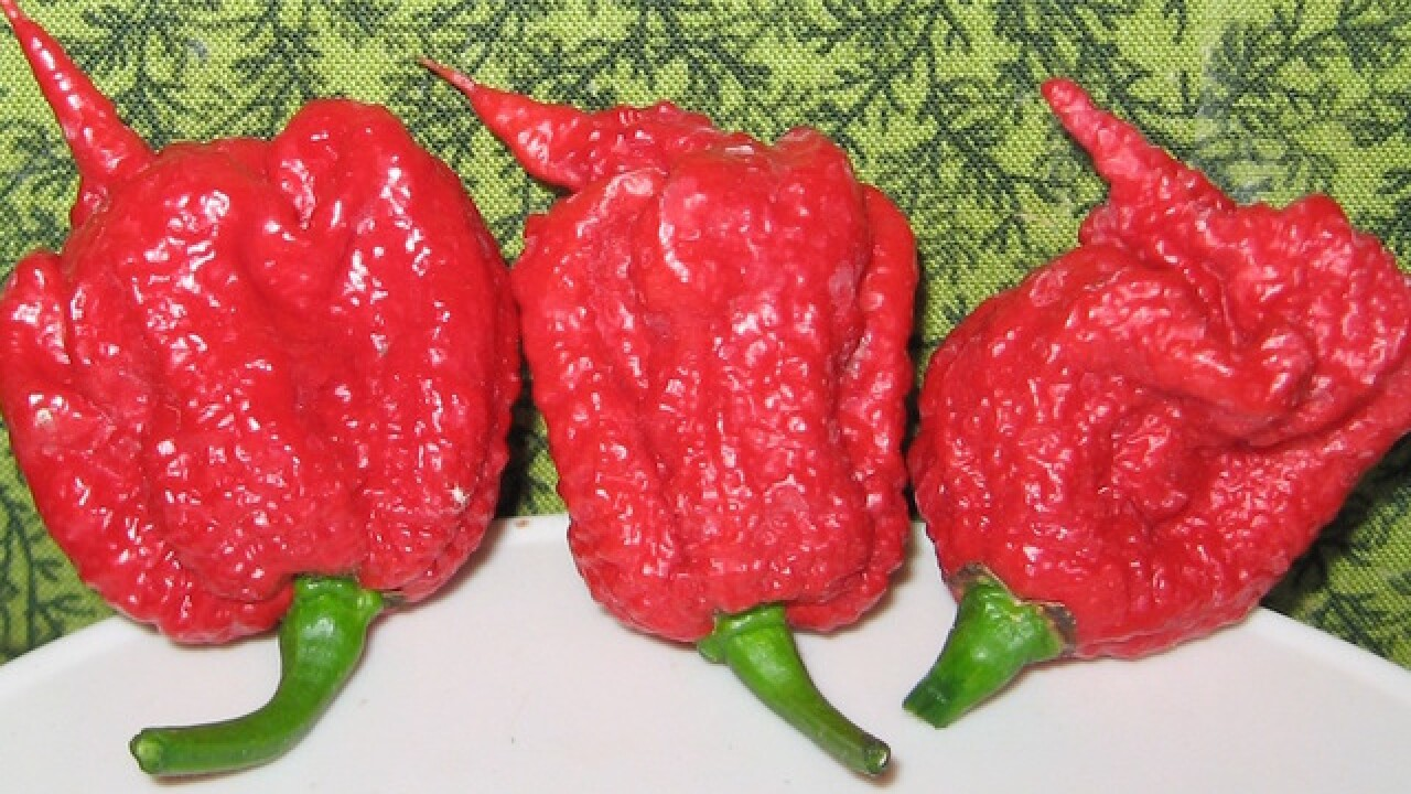 Maker of world's hottest pepper on the defensive after pepper hospitalized man