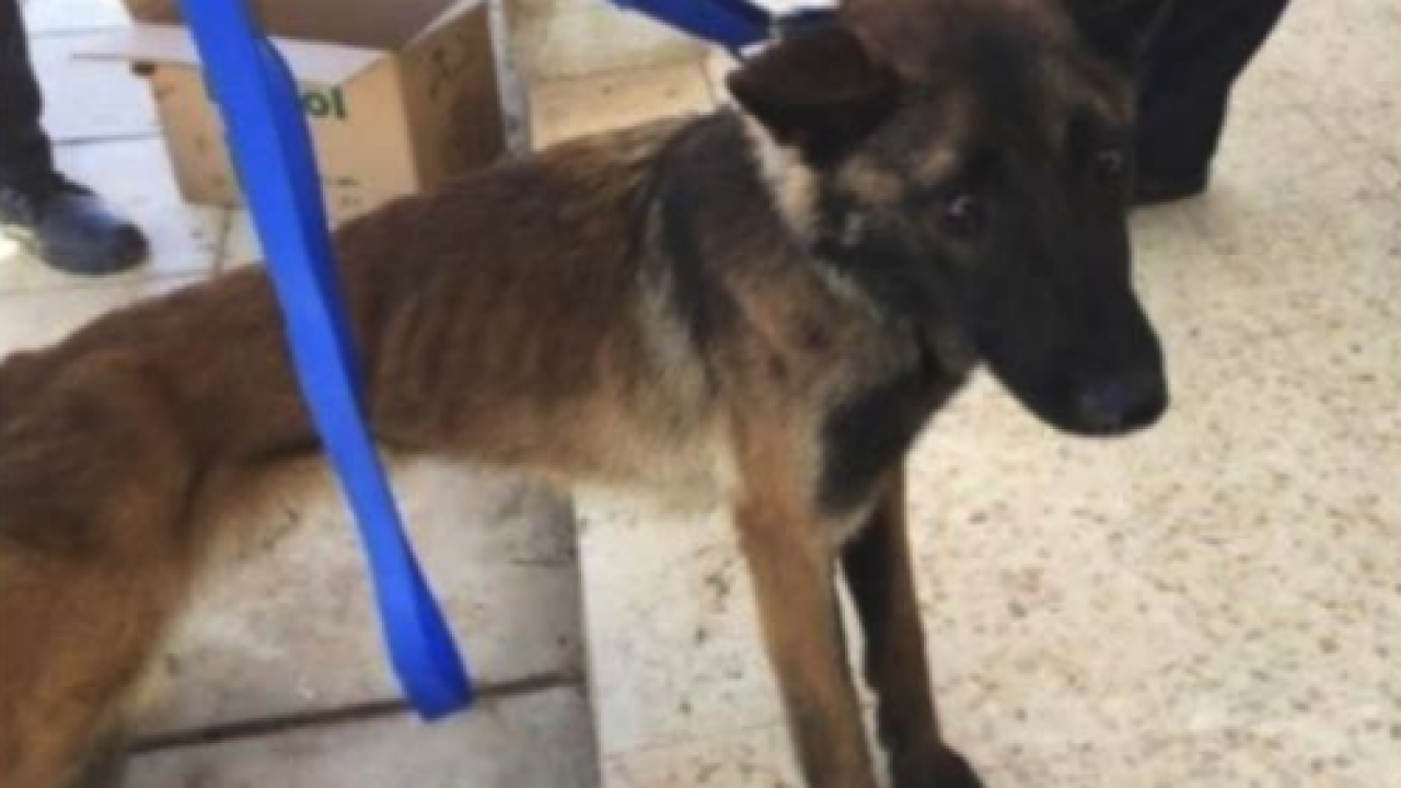 The US sent dogs to Jordan to sniff out explosives. Some of them died from poor treatment, a new report says