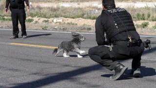 Dog found after rollover crash near Maricopa