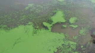 Advisory: Toxic algae lingering on Ohio River