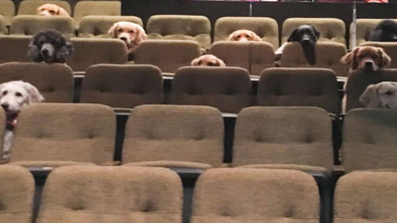 This Adorable Photo Of Service Dogs Watching A Musical In A Theater Is Going Viral