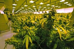 Marijuana Legalization Virginia