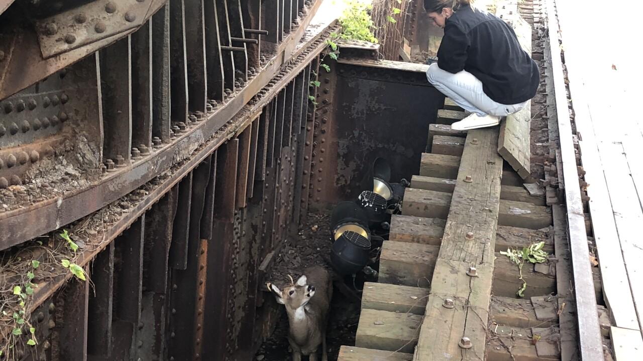 stuck buck 3