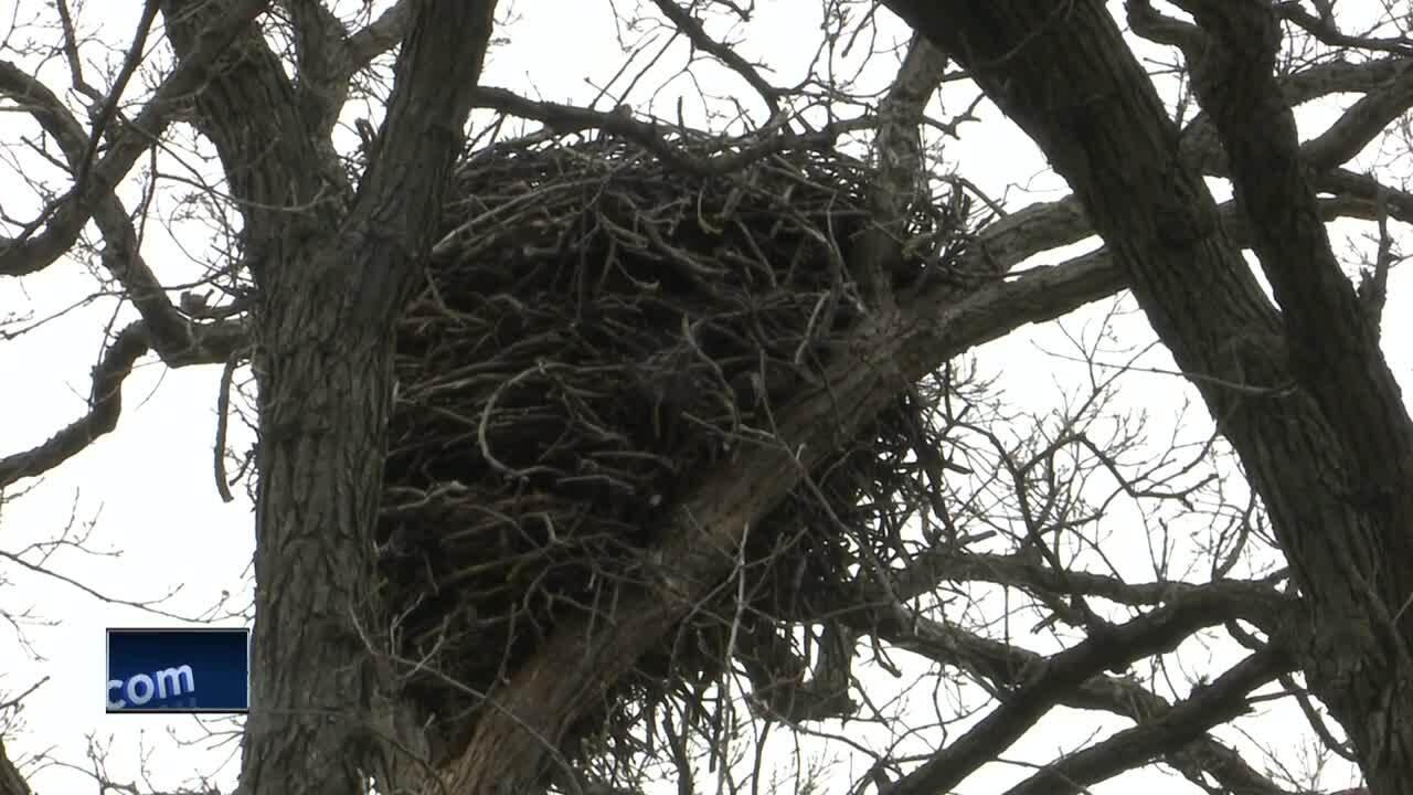 eagle nest celebrate de pere