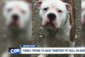 Family trying to save 'sweetest pit bull on earth'
