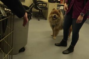 Minnesota woman reunited with lost dog in Billings