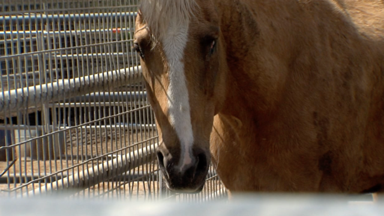 Embattled horse rescue struggles amid closure