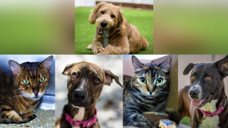 Adoptable-Pets-June-14.png