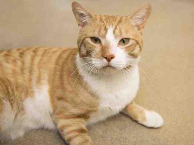Adoptable pets from Arizona Humane Society and Maricopa County Animal Care (7/18)