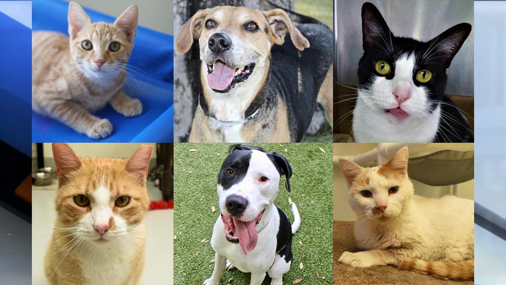 Adoptable-Pets-April-5.png