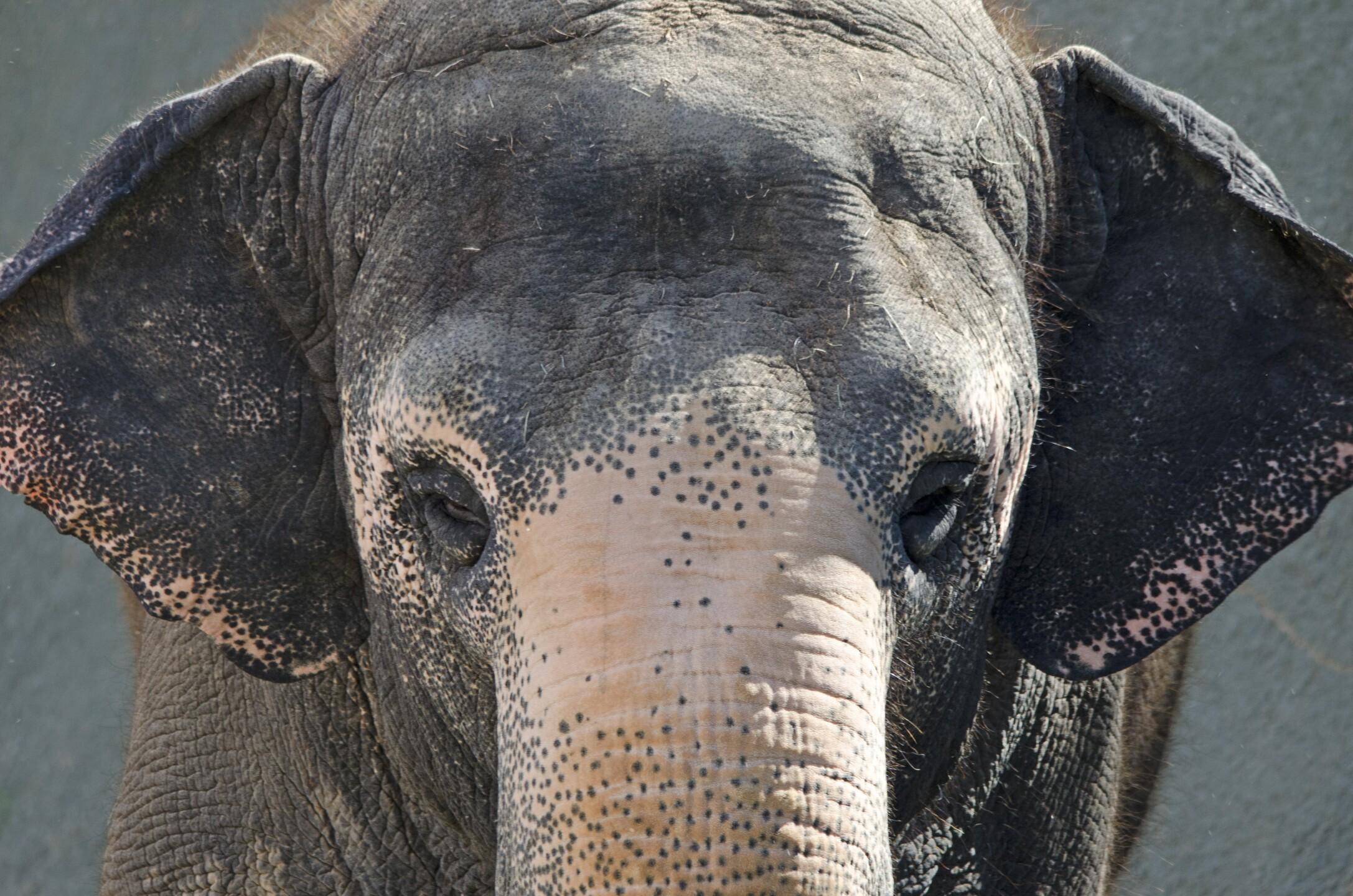 Reba Asian Elephant Phoenix Zoo - Handouts8.jpg