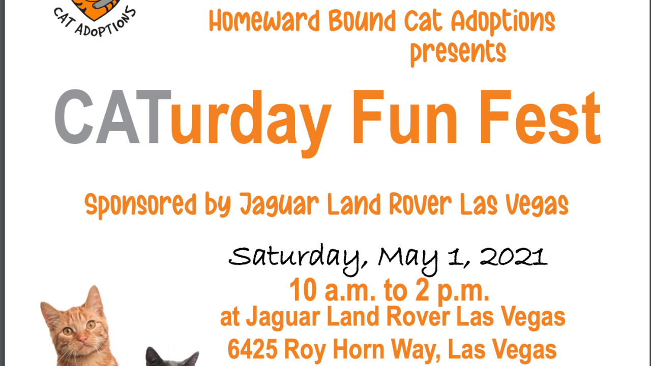 homeward bound cat adoptions_caturday fun fest