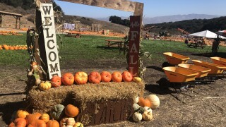 the patch santa maria pumpkin