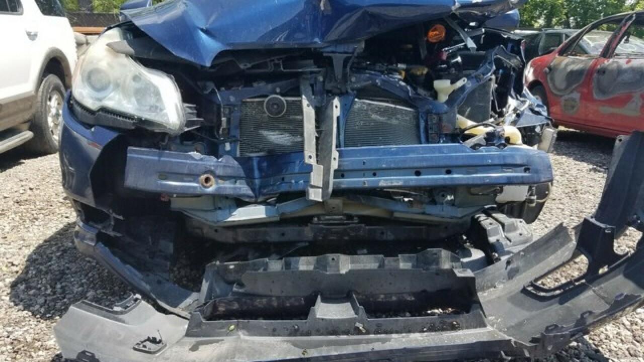 Driver hits, kills black bear near Cleveland
