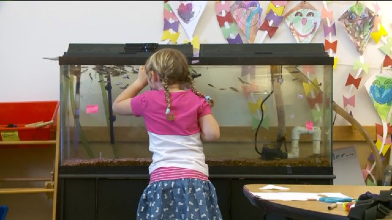 Kindergarten students raise trout in classroom, release them into Ogden River