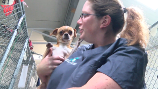 """""""Louse Dogs"""" at Helena shelter"""