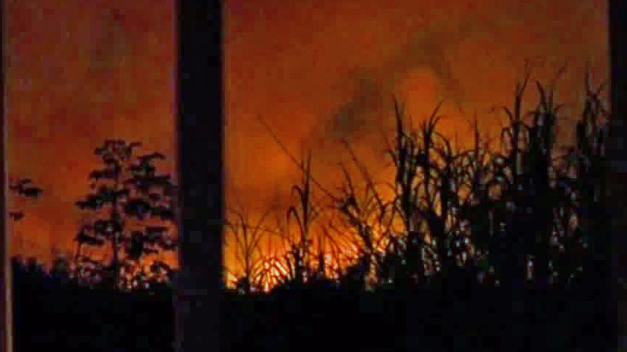 Large brush fire near the Palm Beach-Broward County line on Aug. 1, 2019.