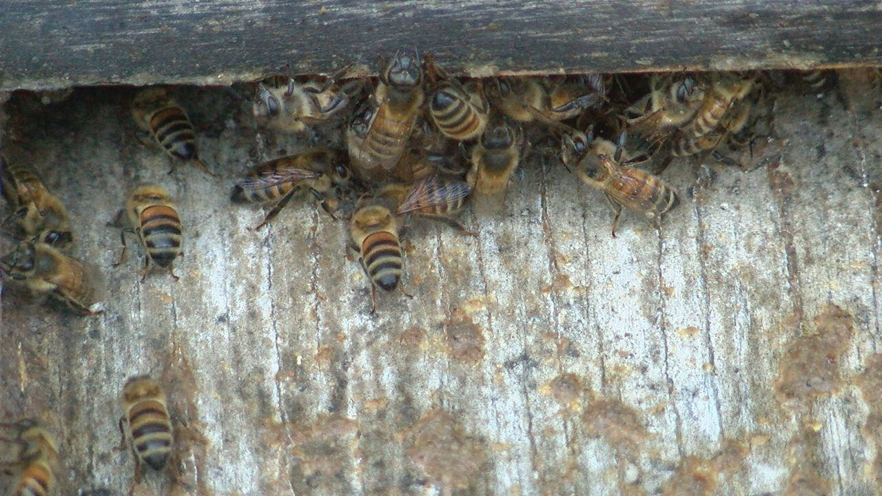 Local beekeepers concerned about routine mosquito sprays