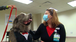 Therapy dogs bring smiles to St. Elizabeth staff
