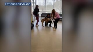Dog reunited with owner Cleveland