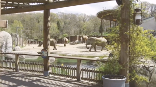 The Cleveland Metroparks Zoo