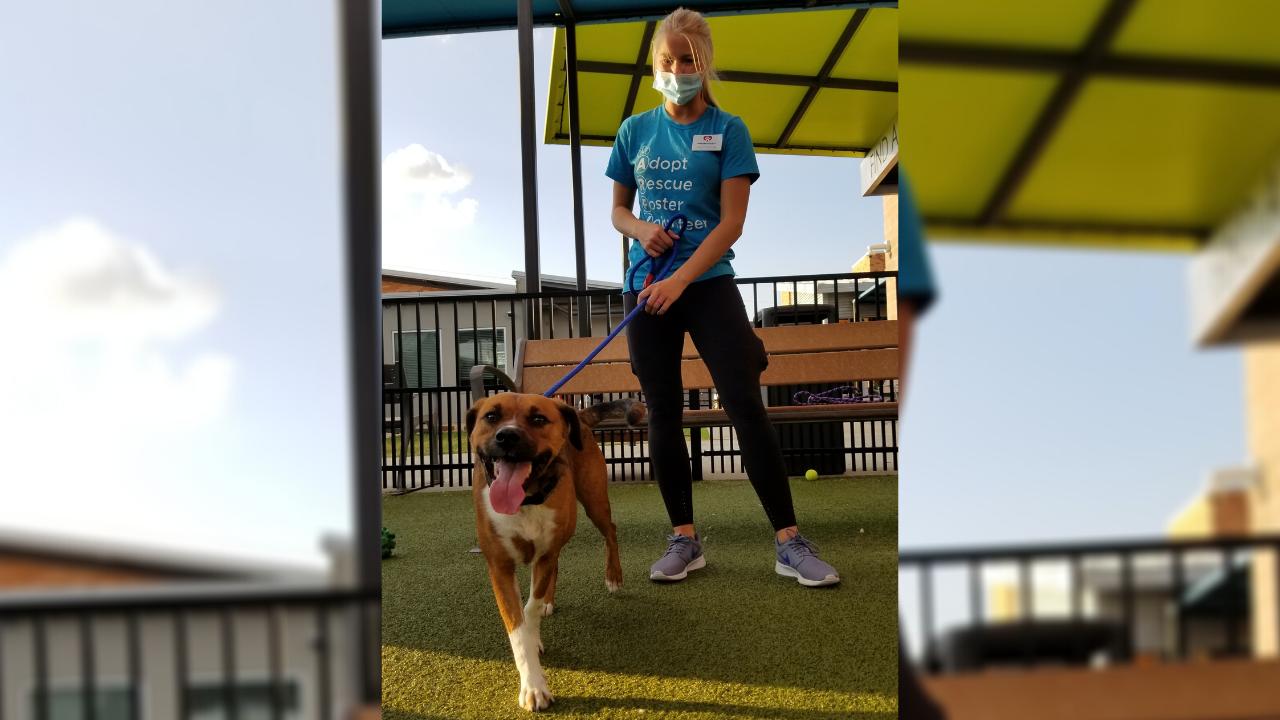 Rusty Pup Adoption