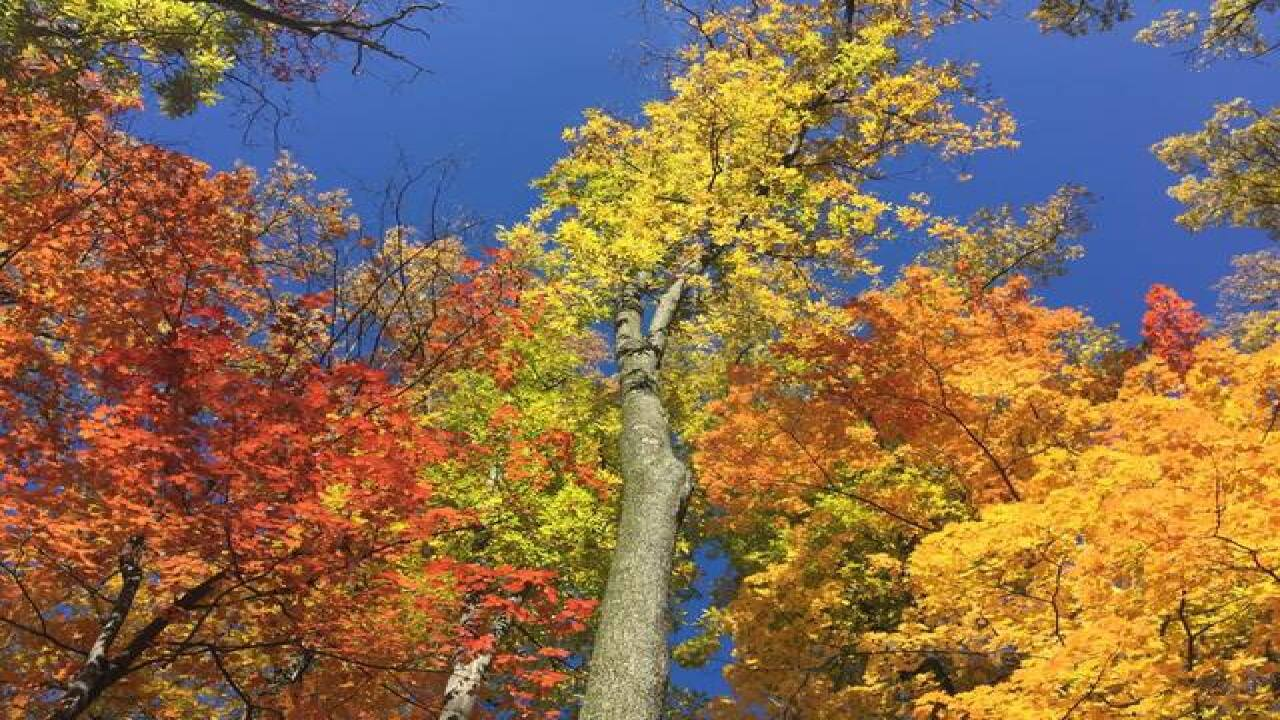 Fall Foliage Gallery | Facebook Fan Submissions