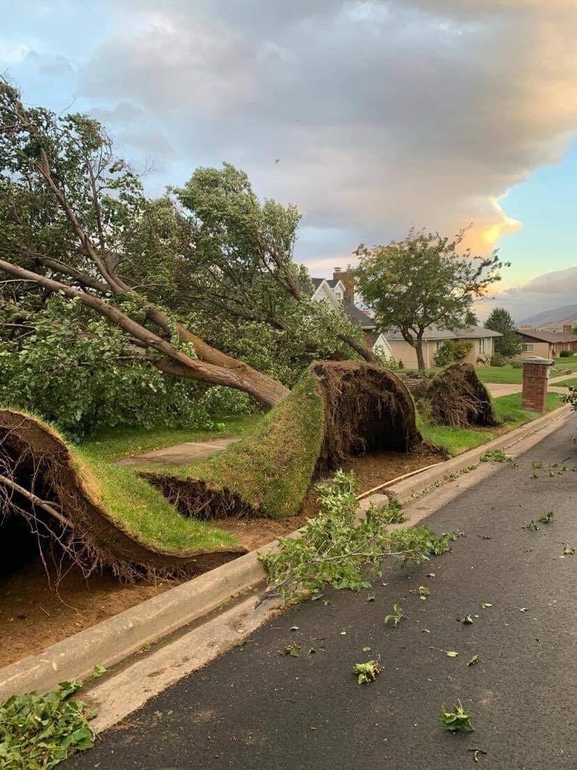 Bountiful Tree Damage1.jpg