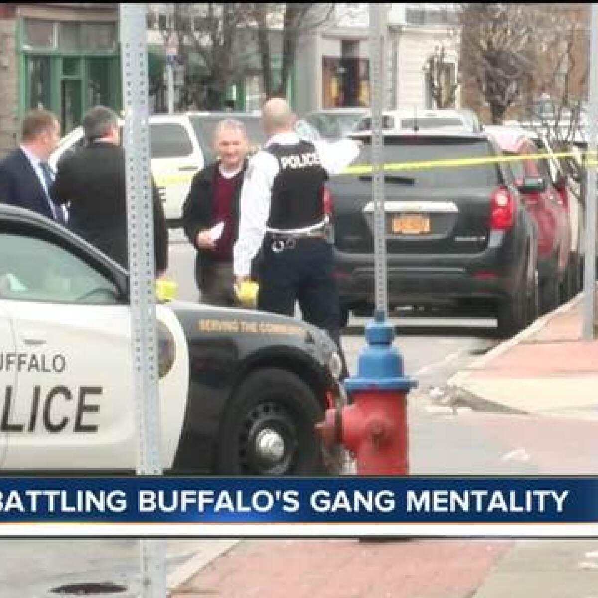 battling buffalo s gang mentality