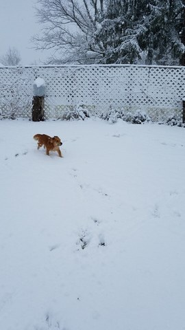 PHOTOS: Snow across NE Ohio and the dogs who love to play in it!