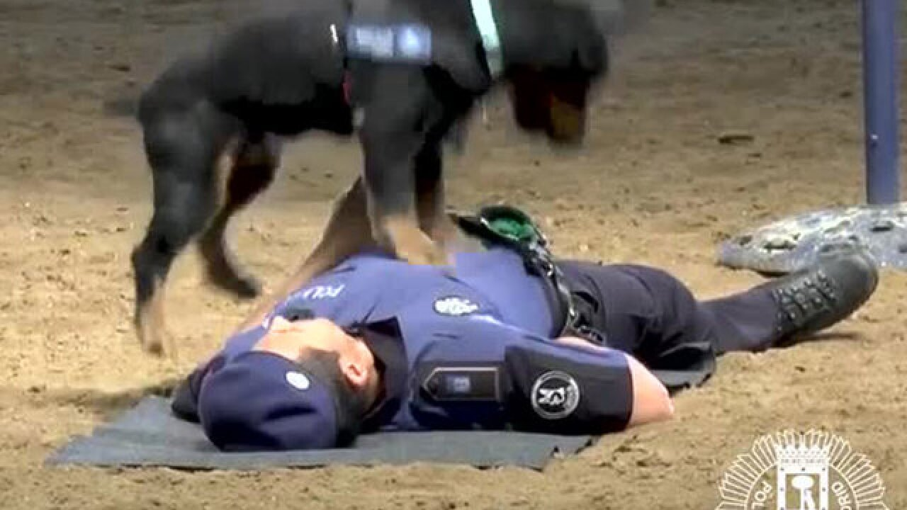 VIDEO: Police dog in Spain performs CPR on officer