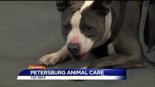 Paws for Pets – Petersburg Animal Care & Control