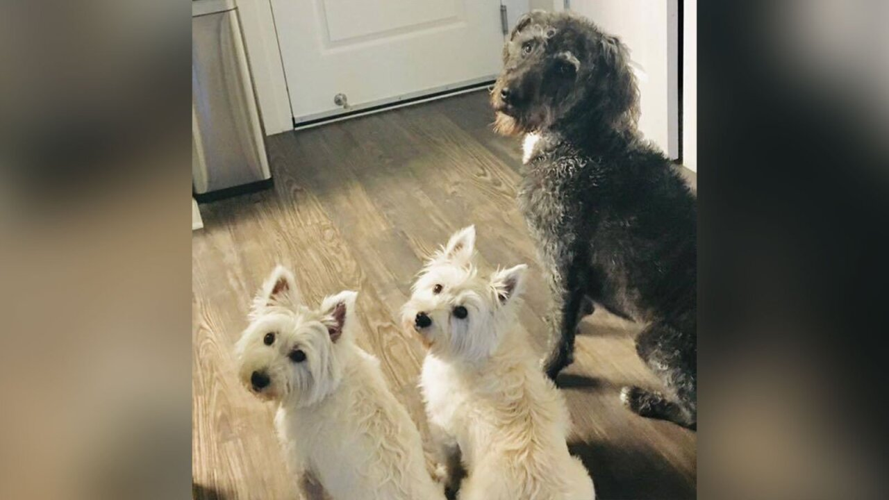 A North Carolina woman took her three dogs to a pond to play. Within hours, her pups had died from toxic algae