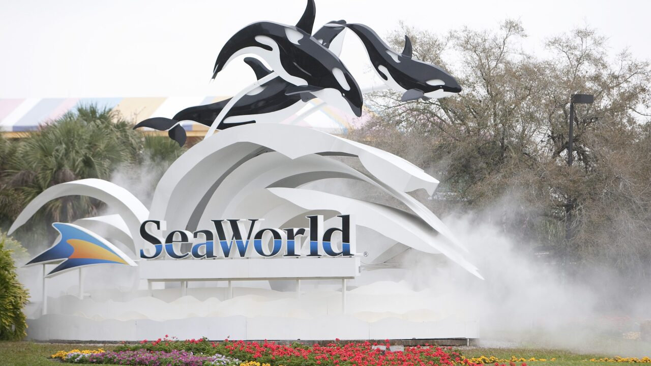 Veterans and Their Families Can Get Free Admission to SeaWorld This Summer