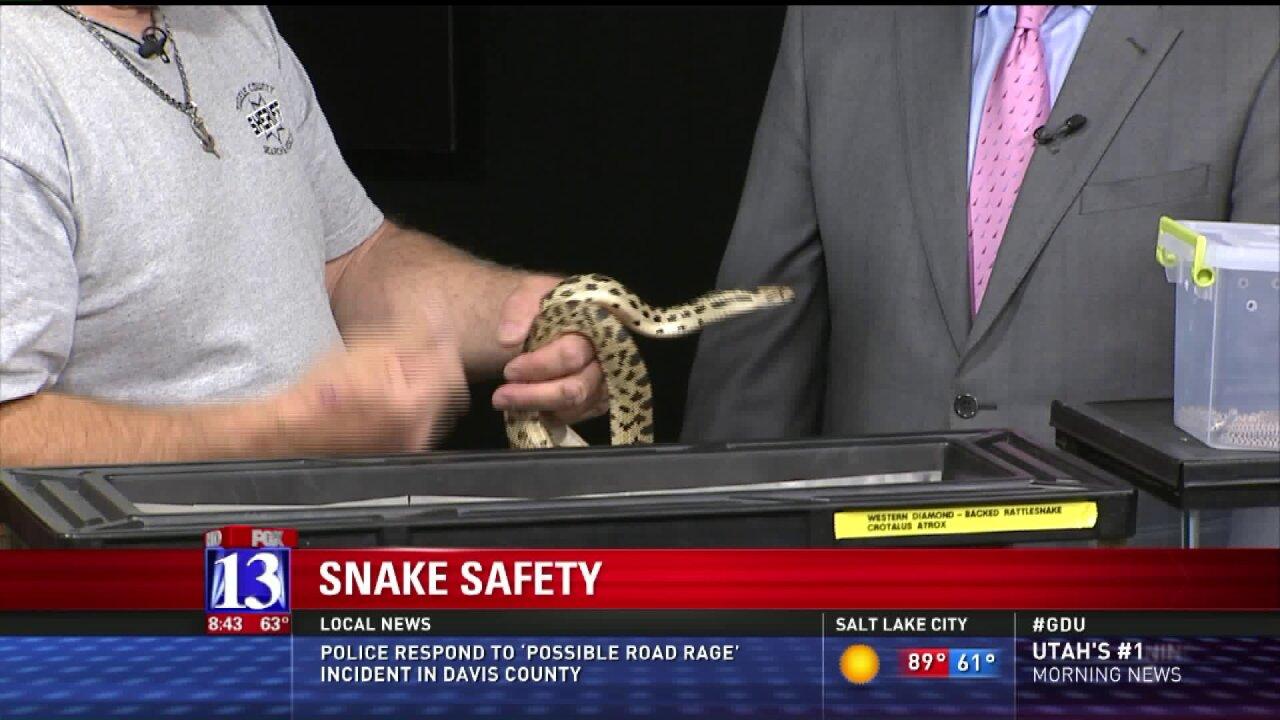 Summertime snake safetytips