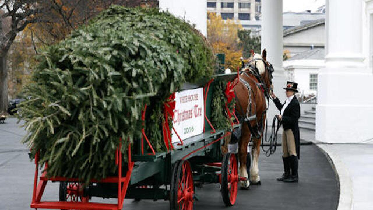 First Lady Michelle Obama receives White House Christmas tree