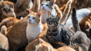 Government ends controversial cat experimentation research