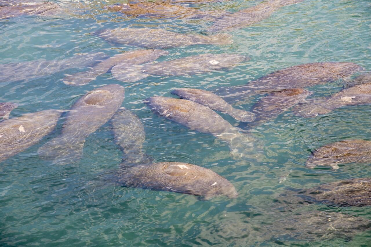 Manatee Lagoon – An FPL Eco-Discovery Center®