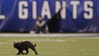 Black cat announced as a starter for the Dallas Cowboys a week after halting a game