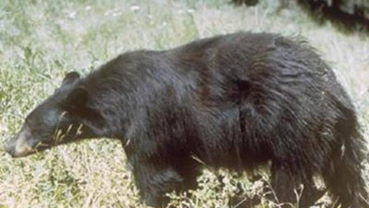 What you need to know about staying safe in Colorado bear country