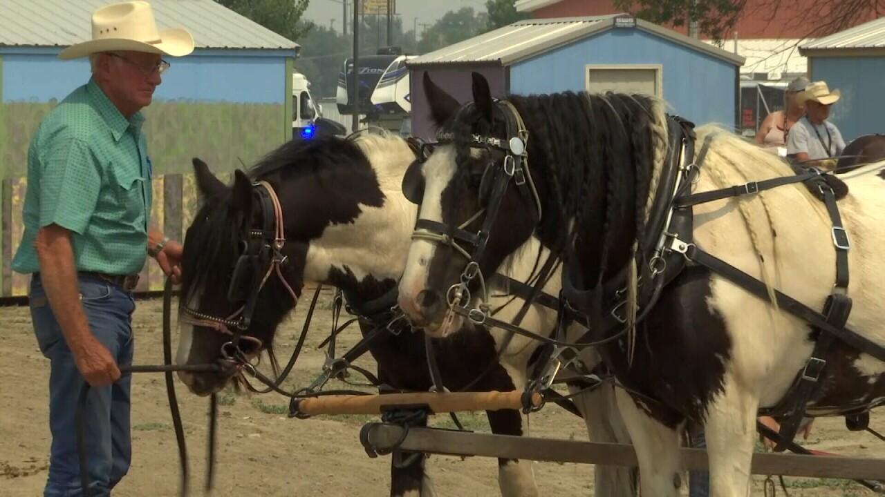 081521 DRAFT HORSE MEDIUM.jpg