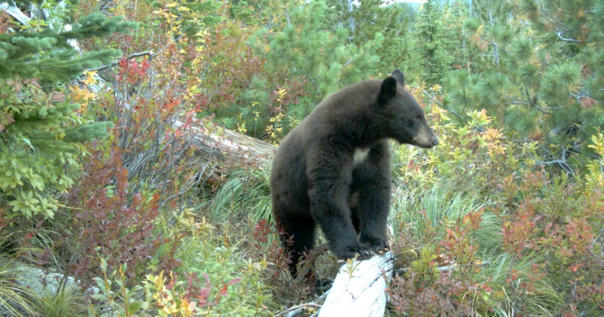 Safely share the Idaho trails with wildlife
