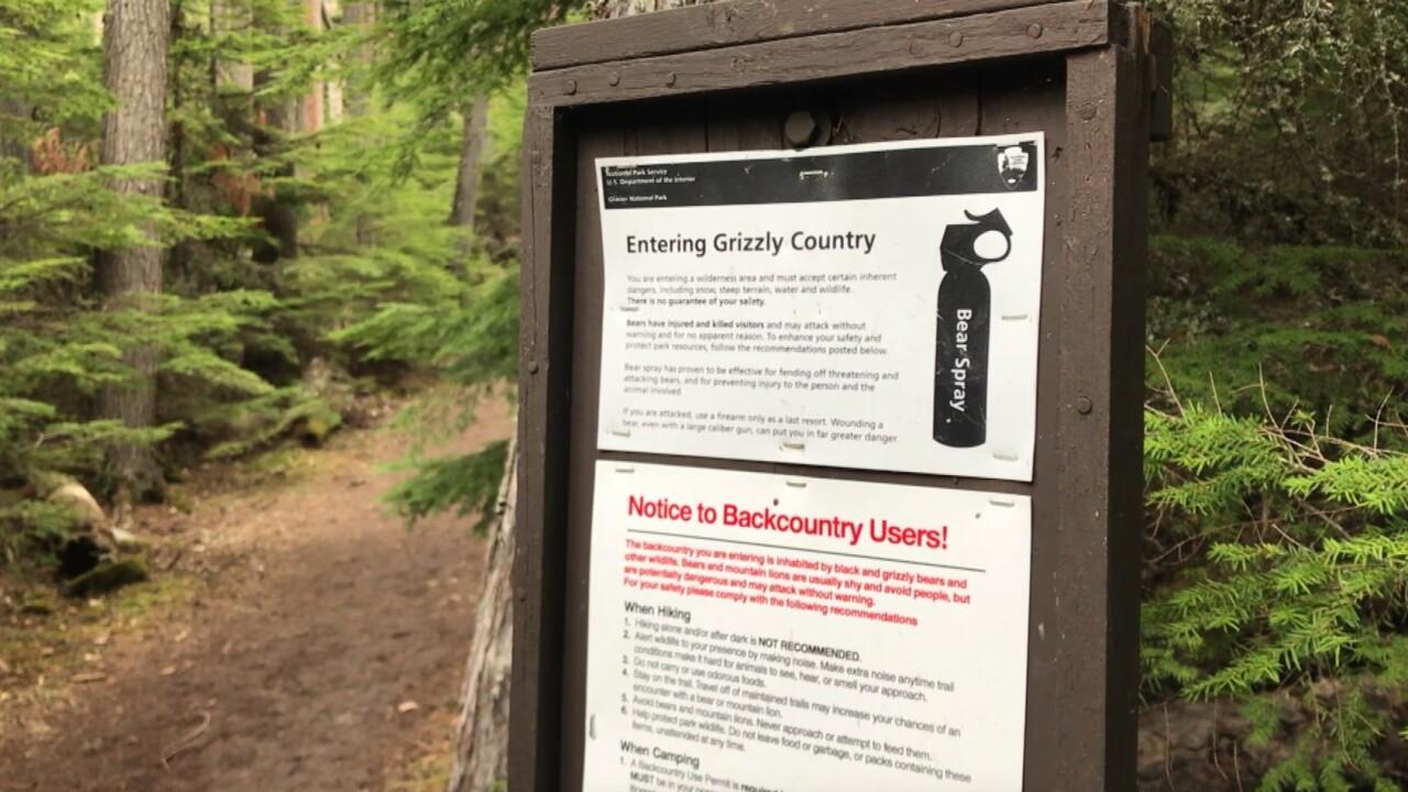 Bear safety in Glacier National Park