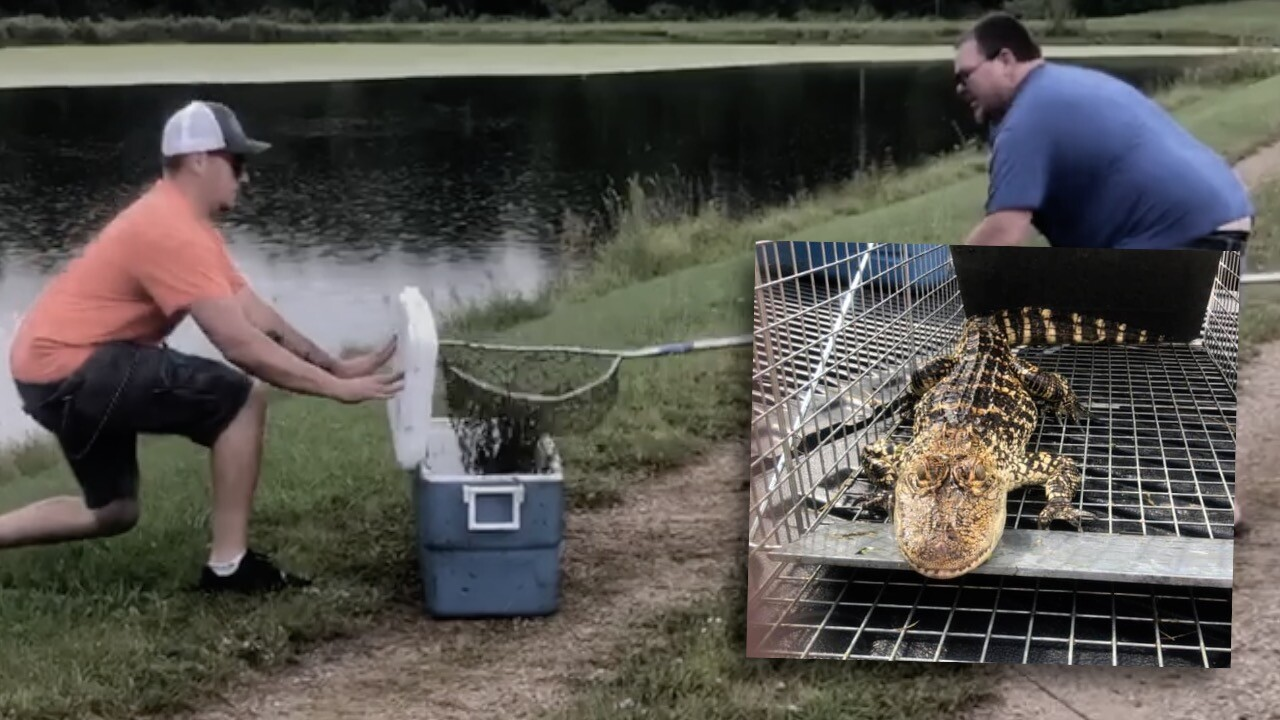 Stanton Gator Caught WEB PIC