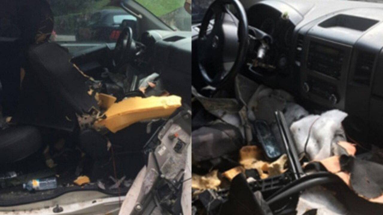 Bear in Tennessee destroys car after getting trapped inside