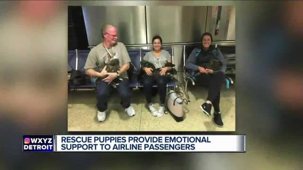 Puppies emotionally support Seattle passengers