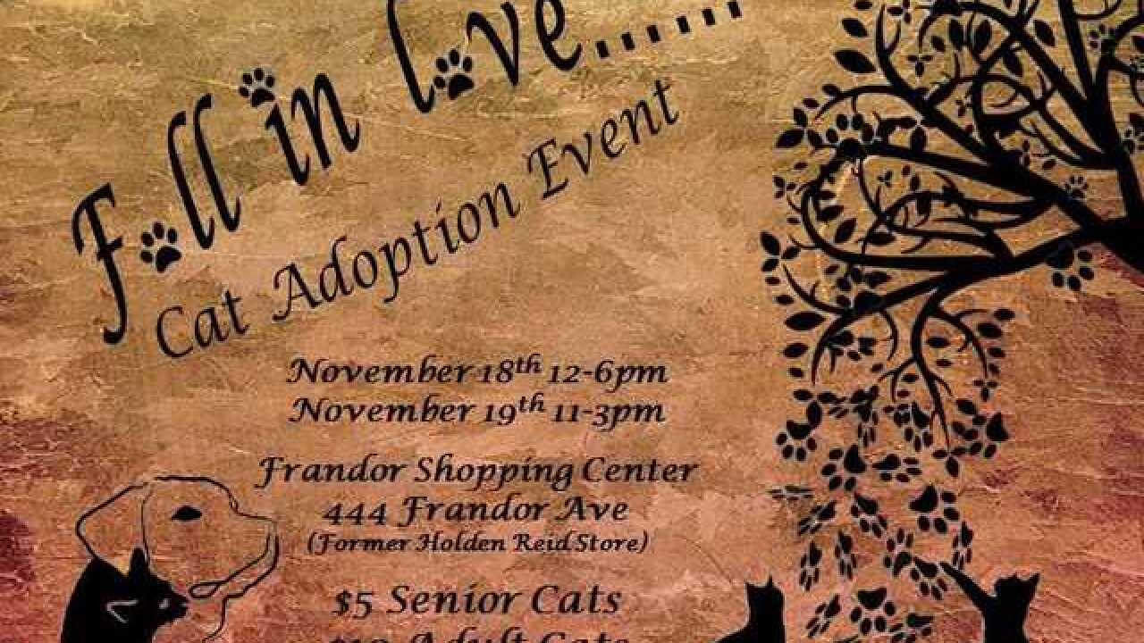 """Fall in Love"" cat adoption event in Frandor this weekend"