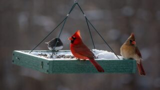 Study Finds Being Around Birds Makes Us Happier