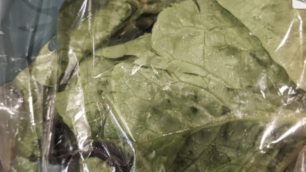 Snake found in lettuce